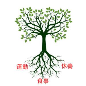 漢方体調の健康木