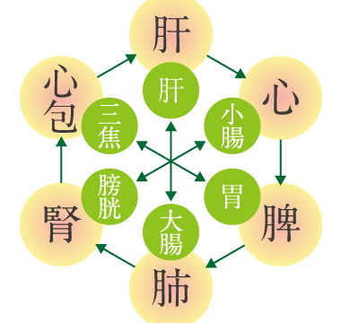 漢方-養生-六腑
